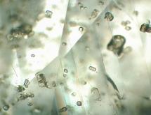 Apatite in unheated sapphire