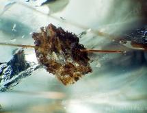 Carbonate and rutile in quartz