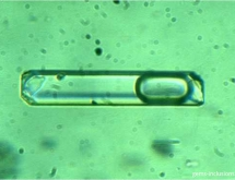 Captured solid particles (not daughter minerals!) inside liquid-vapor inclusion in emerald from the Urals