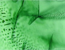 Veil of flux inclusions in synthetic Russian flux-grown emerald