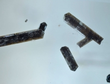 Dark brown dravite inclusions in aquamarine